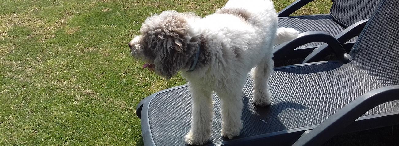 giardino-di-rebecca-dog friendly
